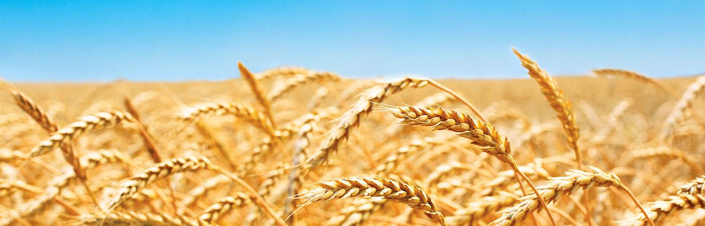 homeslider-barley
